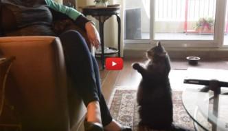 Le 9 cose che i gatti fanno sempre!  [VIDEO]