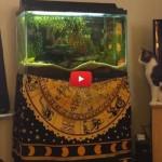 Gatto punta i pesci nell'acquario, ma fallisce miseramente [VIDEO]