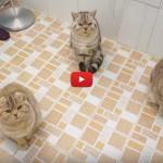 Avete mai provato ad andare in bagno con 5 gatti? [VIDEO]