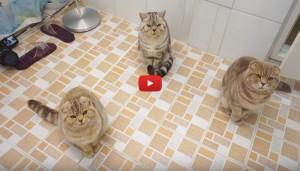 Avete mai provato ad andare in bagno con 5 gatti video - Andare in bagno ...