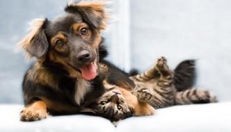È più felice chi vive con un gatto o con un cane?