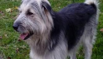 Teo, l'eroico cane che ha salvato l'amico gatto da un lupo