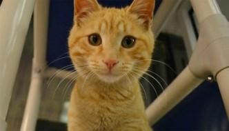Sopravvivono a un incendio: gattini tornano indietro per cercare il proprietario