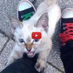 «Ecco il momento in cui una gattina randagia mi ha scelto» [VIDEO]