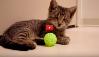 Il gattino cieco Oskar viene adottato e riceve il suo primo regalo [VIDEO]