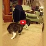 Il gattino si guarda allo specchio e inizia a ballare [VIDEO]