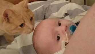 Il suo piccolo amico ha un problema al cuore, il gatto Siggy non lo lascia mai