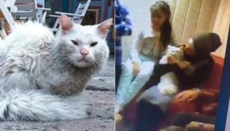 """Il gatto """"profugo"""" Dias riabbraccia la famiglia in Norvegia"""