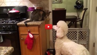 Sfida di sguardi tra cane e gatto: chi vincerà? [VIDEO]