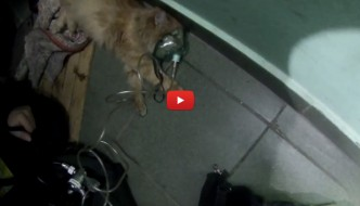Pompieri rianimano un gatto, proprietaria si commuove [VIDEO]