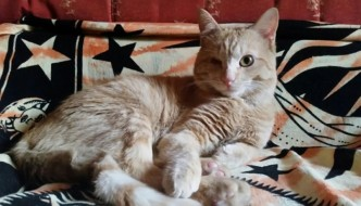 Dopo l'incidente, il gatto Raf ha una nuova vita