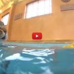 La bimba autistica grazie alla sua gatta impara a nuotare [VIDEO]
