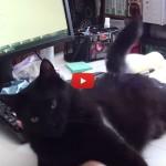 Dovete lavorare e nei paraggi c'è il gatto? Scordatevelo! [VIDEO]