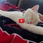 Lazarus, il gatto salvato dal congelamento accudisce il suo umano [VIDEO]
