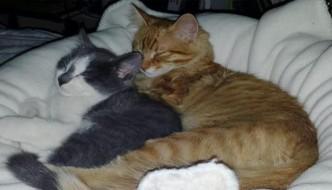 Il gatto Milo torna a casa con un amico randagio