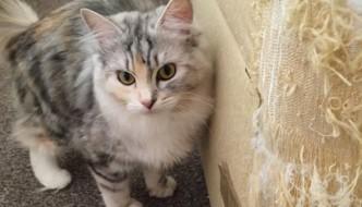 Animali combinaguai: il primo concorso lo vince un gatto