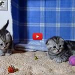 Naomi e Newton, i gattini che imparano a giocare [VIDEO]