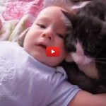 Il bambino non smette di piangere, il gatto riesce a calmarlo [VIDEO]
