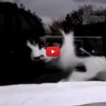 Gatto ingaggia un duello epico con il postino [VIDEO]
