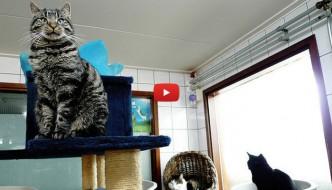 Ad Amsterdam il rifugio per gatti galleggiante [VIDEO]