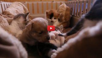 Famiglia di gatti alleva cagnolino orfano a 2 giorni d'età