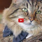 Adesso è Corduroy il gatto più vecchio del mondo!