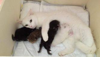 Pandora, la gatta incinta che ha viaggiato in un motore