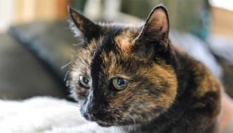Tilly, la gatta rifiutata 30 mila volte