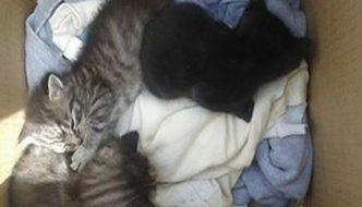 Latisana: lancia gattini dal finestrino e scappa