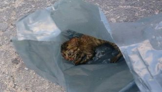 Maestra salva gattino nell'immondizia e lo adotta