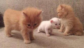 Mamma gatta e i suoi cuccioli adottano gattino orfano
