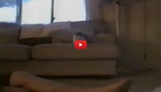 Gattino annusa i piedi della sua umana, la reazione è bellissima! [VIDEO]