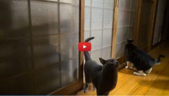 Gatto chiuso fuori, la sua vendetta è tremenda! [VIDEO]