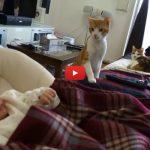 Arriva un neonato in casa, la discreta curiosità del gatto è commovente [VIDEO]
