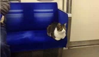 A Tokyo c'è un gatto che viaggia sempre in metro