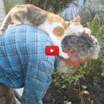 Il gatto ama così tanto il suo papà che non lo lascia mai [VIDEO]