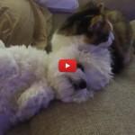 Lavaggio e toelettatura gratis da Frankie il gatto! [VIDEO]