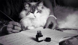 """""""Passions"""", quando gatti e fotografia si fondono"""