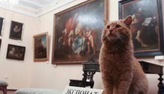 Maray, il gatto assunto come custode del museo