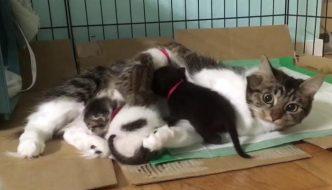 Gatta viene allevata da Husky, adesso si prende cura di 9 randagi