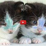 Gattini vittime di uno scherzo crudele: colorati col pennarello [VIDEO]