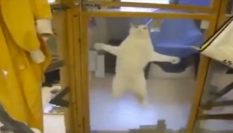 Il gatto vede il suo volontario preferito: esplosione di gioia! [VIDEO]