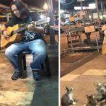 Artista di strada si esibisce, gli spettatori sono quattro gattini incantati [VIDEO]