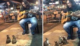 Artista di strada si esibisce, gli spettatori sono 4 gattini incantati [VIDEO]