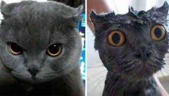 Gatti prima e dopo il bagnetto: ecco le loro facce!