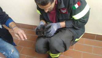 Il gatto Ceppino si incastra in un'auto, mobilitazione generale per salvarlo