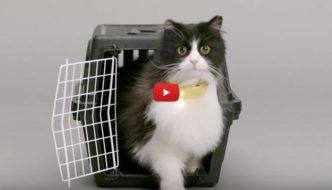 Invenzione rivoluzionaria: il collare che traduce i miagolii del nostro gatto [VIDEO]