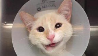 Duchessa, la gatta con la mascella rotta che sembra sorridere sempre