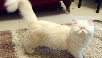 Moet, la gatta diventata cieca a causa di una gabbia troppo sporca