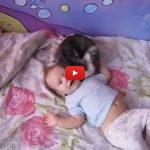 Il neonato piange, la gatta cerca di tranquillizzarlo [VIDEO]